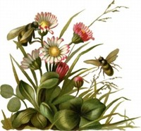 Beesflowers